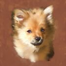 'Bambi' Pomeranian Dog by Trish Loader