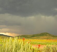 Storm Over the Field by JoAnn Glennie
