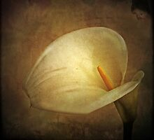 ~ Watching Over Lily ~ by Lynda Heins