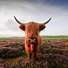 Baslow Highland Cattle at 10mm by James Grant