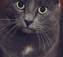 Portrait of a Male Cat by SarinaGito