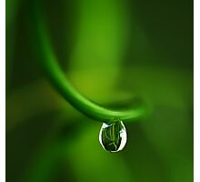 drop in green Photographic Print