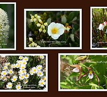 Collage of White Rocky Mountain Wildflowers by Vickie Emms