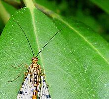 It's golden... A bug that is!  by Marcia Rubin