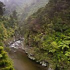 Misty Mountains rise above the river, Kaitoke Regional Park by Brendon Doran