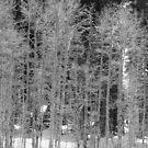 Tahoe's Beauties by Devalyn Marshall