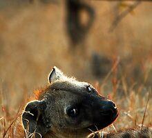 Kruger National Park, South Africa. 2009  V by Damienne Bingham