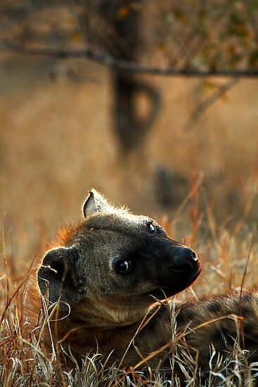 Kruger National Park, South Africa. 2009  V by Damienne Bingham