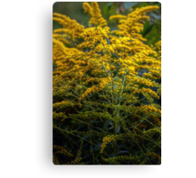 Yellow Wild Flowers Canvas Print