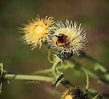 Buzzzz by Gail Falcon