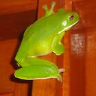 Mr Green Tree Frog by kimathy