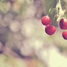 Cherries by mariakallin