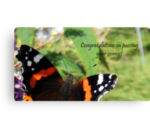 Congrats on passing exams card-Red Admiral Butterfly Canvas Print