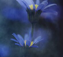 True Blue  (2).... by Sharon House