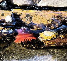 Rockpool at Lorne Beach by SuziTC