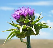 scotish thistle by Mariah Elliston