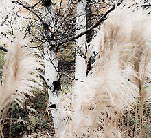 A Cold Wind  by olga zamora