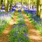 Bluebell tracks in May by Steve Burke
