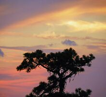 Tree Top at Sunset by Caren