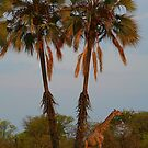 Giraffe Under Palm Trees by naturalnomad