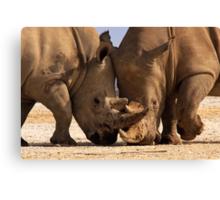 White Rhino at loggerheads. Nakuru National Park, Kenya. Africa. Canvas Print