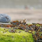 Seaweed Tangle by katiehasheart