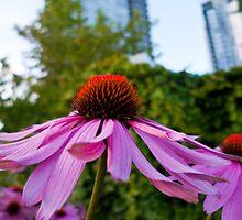 Urban Echinacea by HelenPadarin