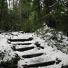 Sahalie's Snowy Steps by Sarah Trent