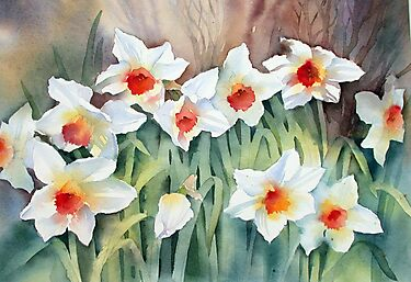 Daffodils by Ann Mortimer