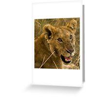 Masai Mara, Kenya. 2009 Greeting Card