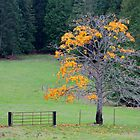 alder tree last leaves by TerrillWelch