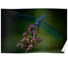 Dark Dragonfly Poster