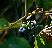 Vineyard Chateau Cooper's Marsh by Mike Oxley