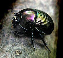 Glossy Pillbug by Carla Wick/Jandelle Petters