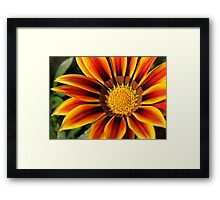 Bill's Flower Framed Print