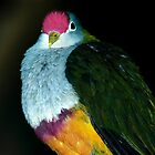 Beautiful Fruit Dove by NinaOswald