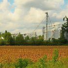 Freshly Harvested Cornfield by Susan Blevins