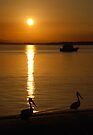 Pelican's at Bribie by KeepsakesPhotography Michael Rowley