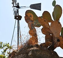 Windmill and Cactus near Pedernales Falls State Park by BrianDawson