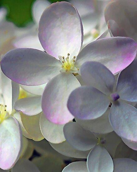 Fall Hydrangea Blossom by T.J. Martin