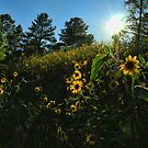 Arizona wildflowers by LizzieMorrison