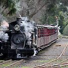 Puffing Billy by Fiona Kersey