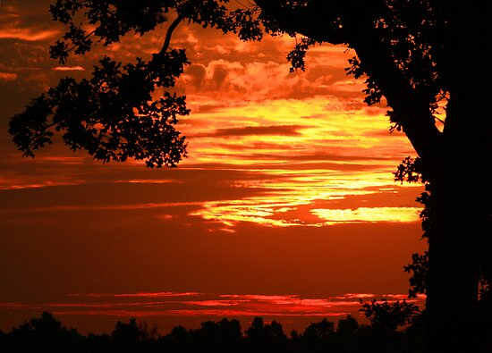 Fiery Sunrise by Susan Blevins