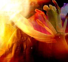 Beauty & Tulip. by Vitta
