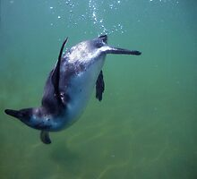 Underwater penguin by Hugh Mitchell