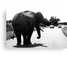 Playing Chicken With An Elephant Canvas Print