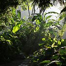 The Secret Garden by MaluMoraza
