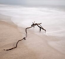 Lonely Branch On The Shore by Donna Eaton