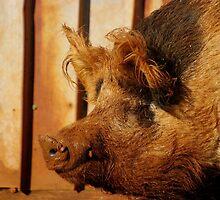 Wilbur by Tamara  Kenneally