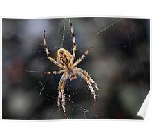 Boris The Spider Poster